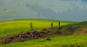 Ландшафт весны в прикарпатских горах с  стоковая фотография