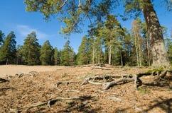 Ландшафт весны в древесине Стоковое Изображение