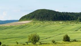 Ландшафт весны зеленых пшеничных полей Стоковые Изображения