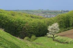 Ландшафт весны долины сельский Стоковые Изображения RF