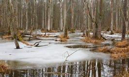 Ландшафт весны старой стойки ольшаника Стоковое Изображение