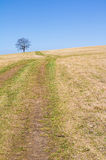 Ландшафт весны с деревом луга и пасьянса Стоковая Фотография