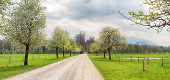 Ландшафт весны с деревьями и дорогой стоковые фотографии rf