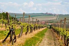 Ландшафт весны с зелеными виноградниками и городком на предпосылке Gr стоковые изображения rf
