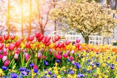 Ландшафт весны с красивыми тюльпанами и multicolor цветками Стоковое Изображение
