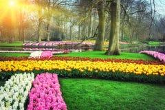 Ландшафт весны с красочными цветками стоковое изображение