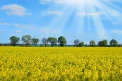 Ландшафт весны с полем и деревьями рапса Стоковые Изображения