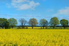 Ландшафт весны с полем и деревьями рапса Стоковая Фотография RF