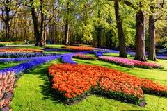 Ландшафт весны с multicolor тюльпанами в красивом парке города Стоковое Изображение