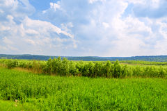 Ландшафт весны Стоковое Изображение