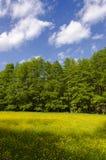 Ландшафт весны. Стоковые Фотографии RF