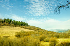 Ландшафт весны, coniferous лес на зеленой предпосылке лужайки Стоковая Фотография RF