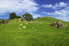 Ландшафт весны Nicasio Стоковая Фотография RF