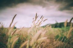 Ландшафт ветра луга Стоковые Фотографии RF