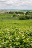 Ландшафт виноградника в Франции Стоковое фото RF