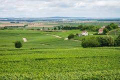 Ландшафт виноградника в Франции Стоковые Изображения RF