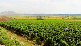 Ландшафт виноградника акции видеоматериалы