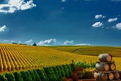Ландшафт виноградника Стоковые Фотографии RF