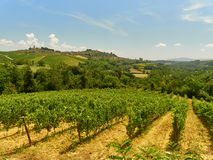 Ландшафт виноградника Стоковое Фото