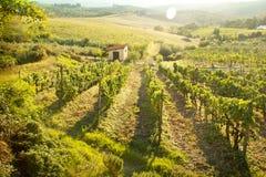Ландшафт виноградника Chianti в Тоскане, Италии стоковая фотография