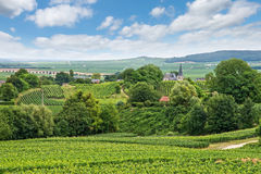 Ландшафт виноградника, Montagne de Реймс, Франция Стоковое Изображение
