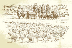 Ландшафт, виноградник Стоковое Изображение RF