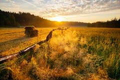 Ландшафт восхода солнца весны Стоковые Фото