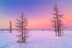 Ландшафт восхода солнца зимы с накаляя красным небом Панорама леса зимы в снеге Стоковые Изображения