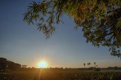 Ландшафт восхода солнца на пруде лотоса Стоковое Фото