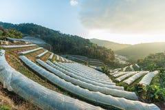 Ландшафт восхода солнца плантации, королевская аграрная станция Inthanon Стоковые Фотографии RF