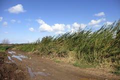 Ландшафт влажной дороги сценарный Стоковые Изображения RF