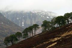 Ландшафт в гористых местностях, Шотландия Стоковое Изображение RF