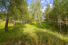Ландшафт в лесе березы, Россия лета, Урал, Стоковые Изображения