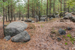 Ландшафт в лесе Стоковые Фото