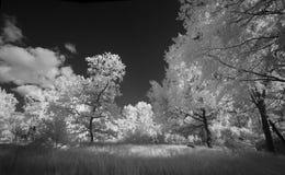 Ландшафт в инфракрасном свете Стоковое Изображение