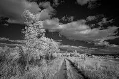 Ландшафт в инфракрасном свете Стоковая Фотография RF