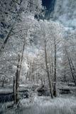 Ландшафт в инфракрасном свете Стоковая Фотография