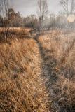 Ландшафт в ноябре Стоковое Изображение RF