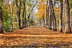 Ландшафт в парке осени стоковые изображения rf