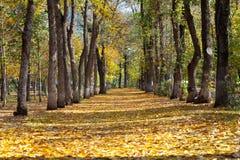 Ландшафт в парке осени стоковое изображение