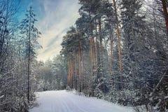 Ландшафт в снежном лесе Стоковое фото RF