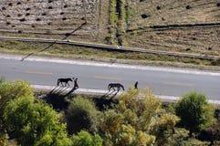 Ландшафт в Тибете Стоковая Фотография