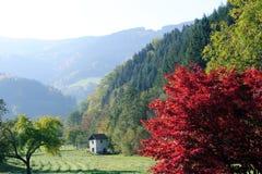 Ландшафт в черно- лесе стоковые фото