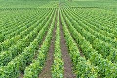 Ландшафт в Шампани-Ardenne, Франции Стоковое Изображение RF