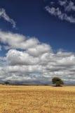 Ландшафт в Южной Африке Стоковые Изображения RF