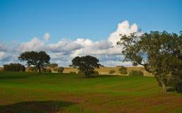 Ландшафт в Alentejo Стоковые Изображения