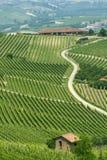 Ландшафт в Langhe (Пьемонт) стоковые фото
