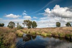 Ландшафт гоньбы Cannock, Англия Стоковое фото RF