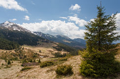 Ландшафт горы, Карпаты Стоковое фото RF