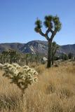Ландшафт горы на заднем плане кактуса и юкки Стоковая Фотография